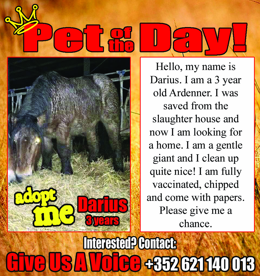 01-11-16 Pet of the Day