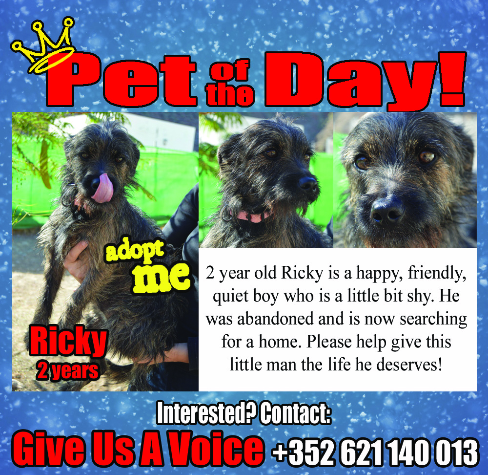01-19-16 Pet of the Day