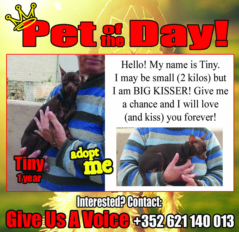 01-25-16 Pet of the Day