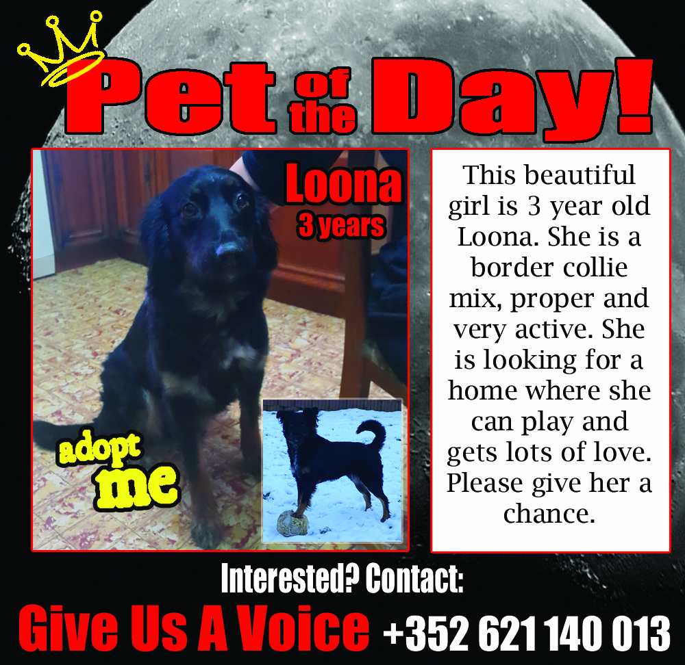 02-02-16 Pet of the Day