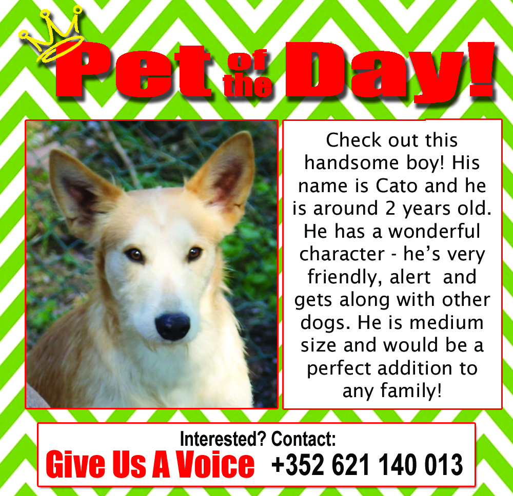 02-08-16 Pet of the Day (Pegadas e Bigodes)