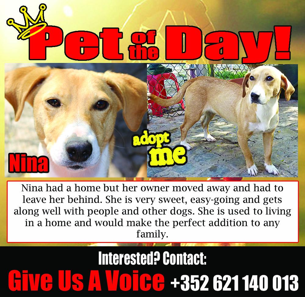 02-09-16 Pet of the Day (Pegadas e Bigodes)