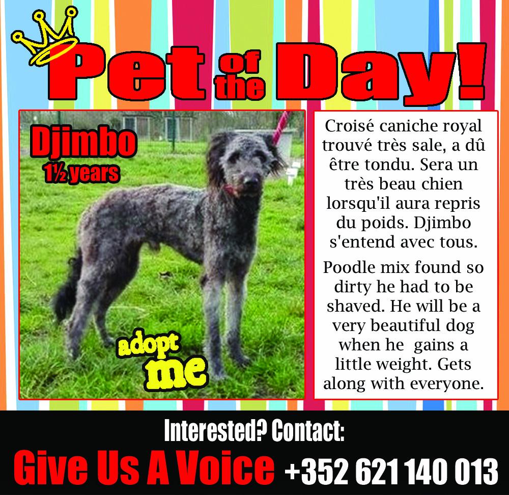 02-10-16 Pet of the Day SPA L Etang Bleu