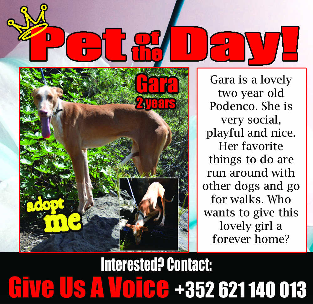 02-11-16 Pet of the Day (Anahi)