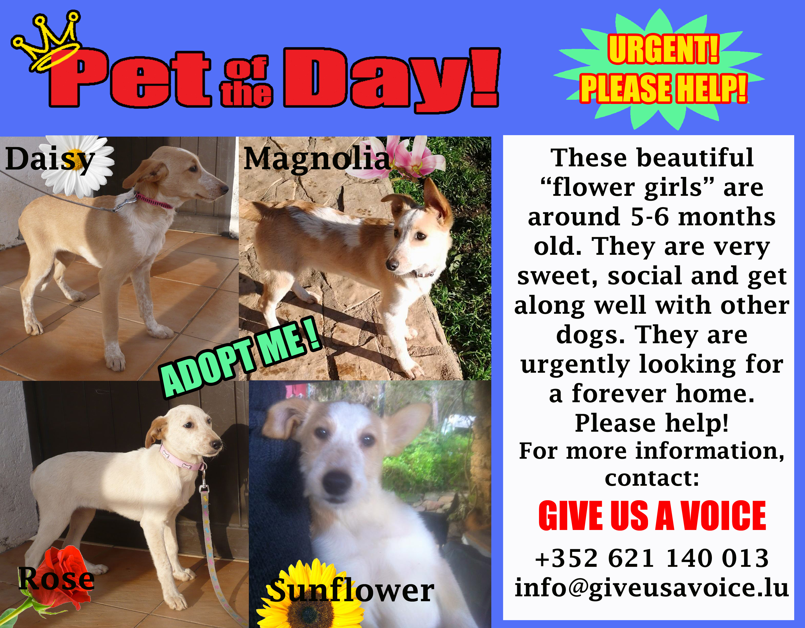 02-17-16 Pet of the Day copy