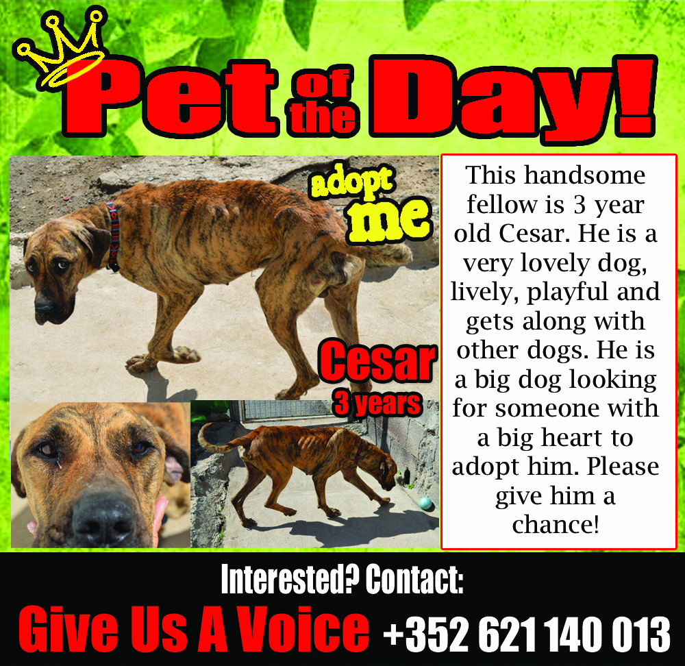 02-23-16 Pet of the Day