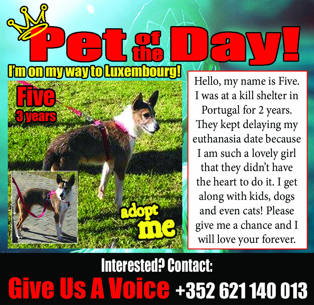 02-25-16 Pet of the Day copy