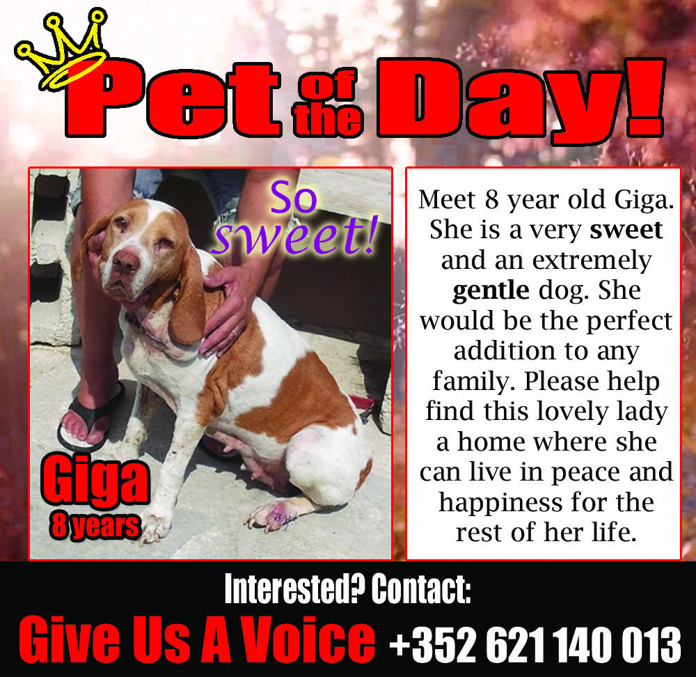 02-26-16 Pet of the Day copy