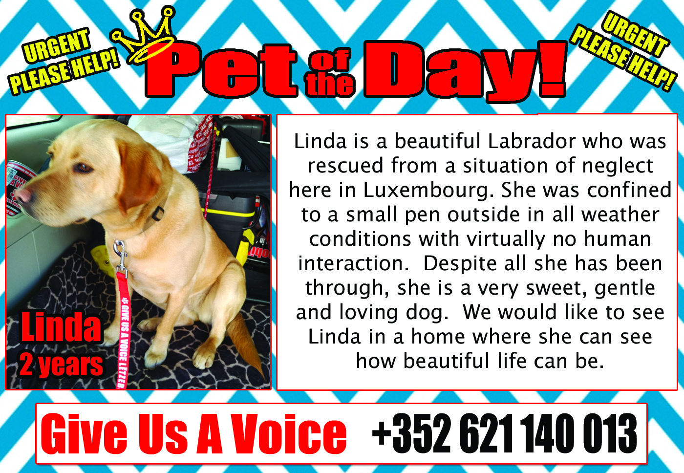 03-02-16 Pet of the Day