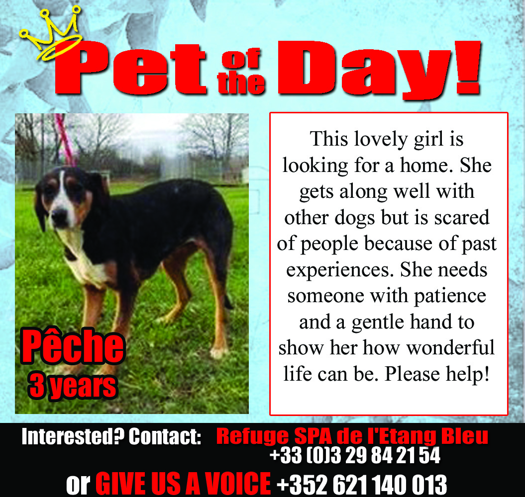 03-04-16 Pet of the Day
