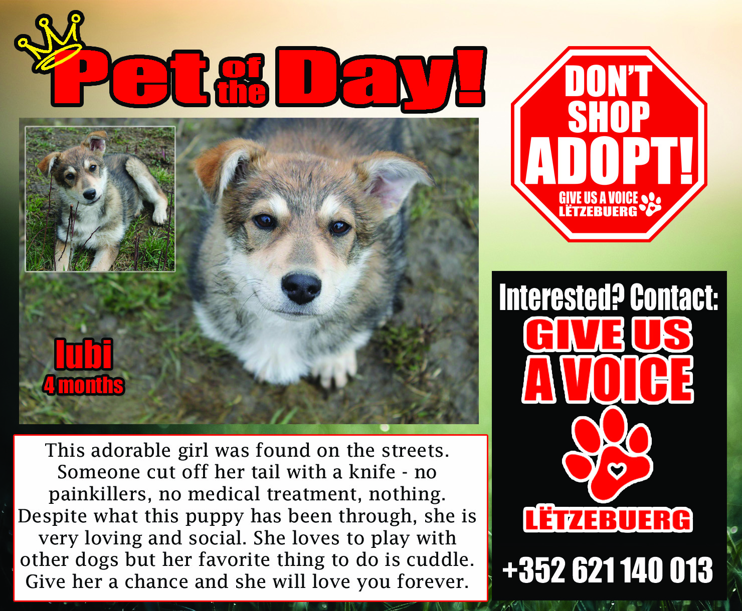 03-08-16 Pet of the Day