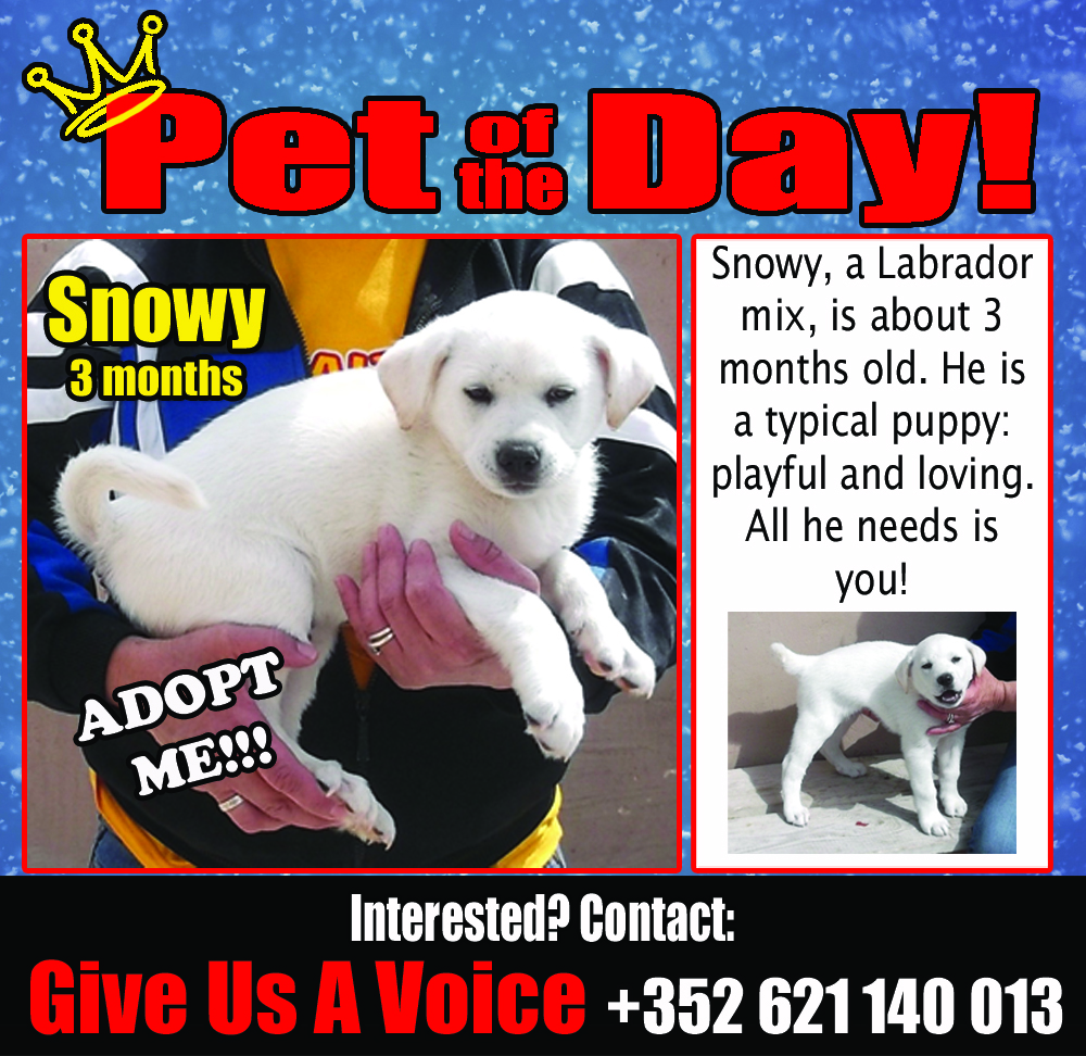 03-16-16 Pet of the Day