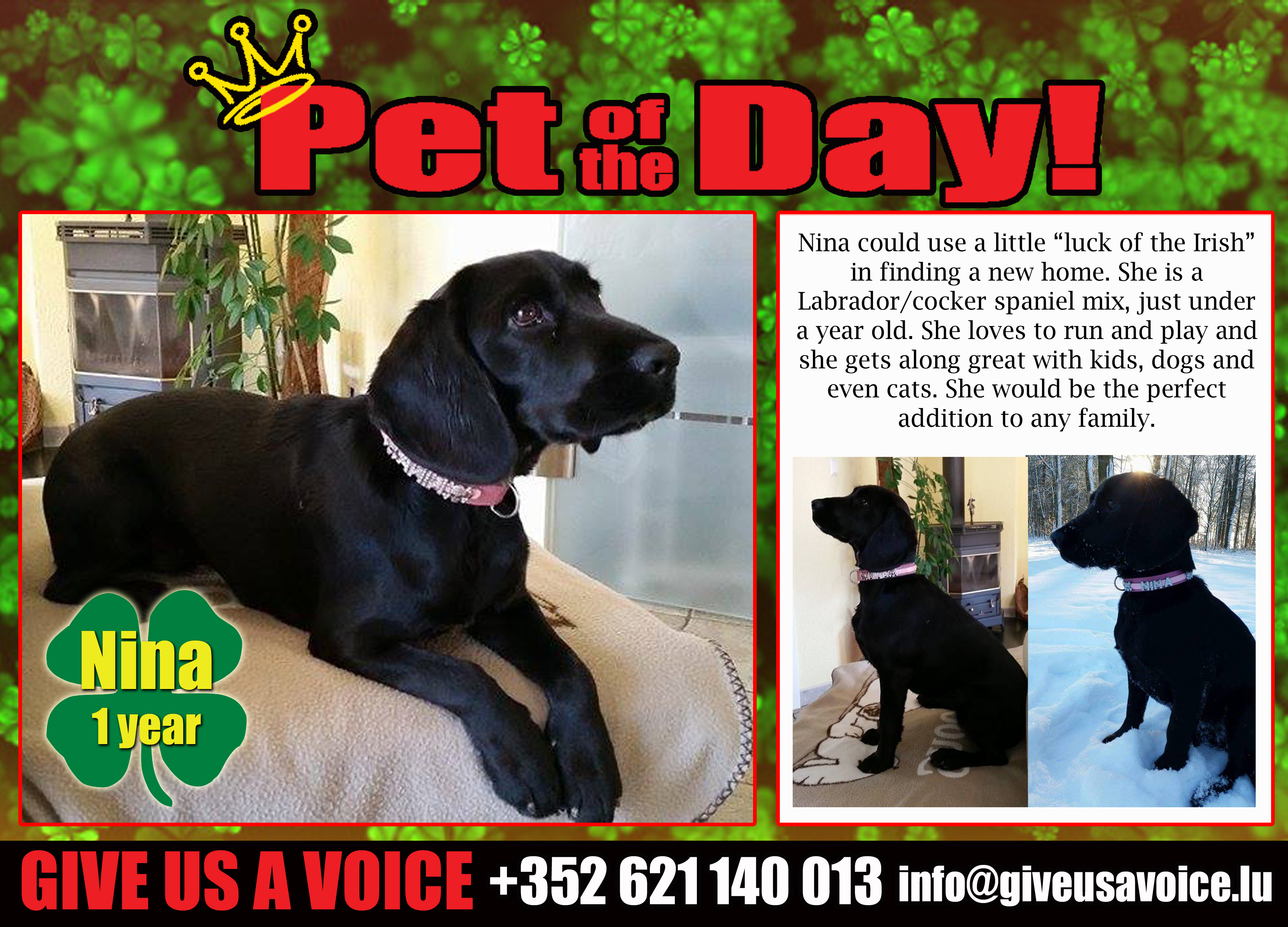 03-17-16 Pet of the Day