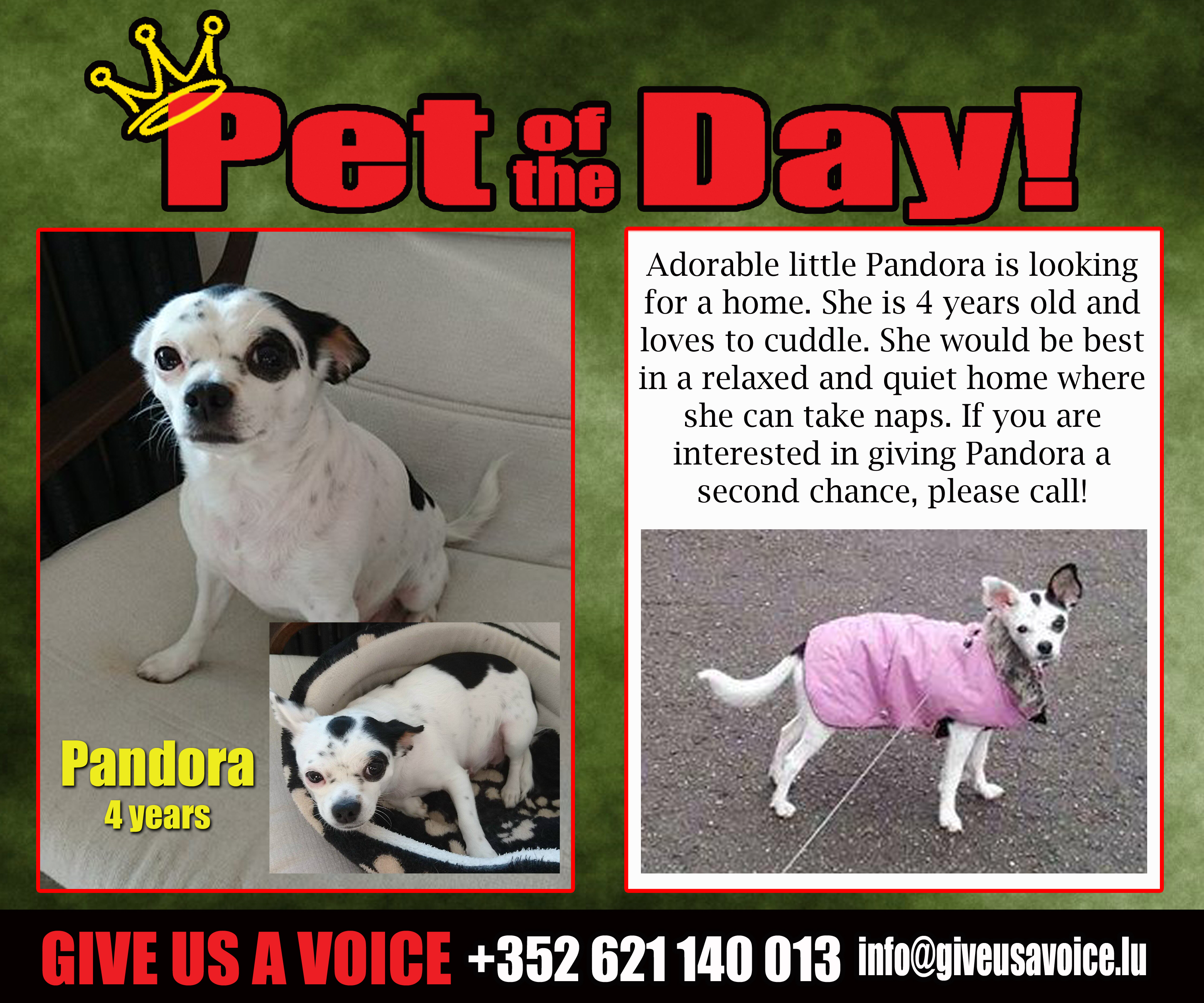 03-18-16 Pet of the Day
