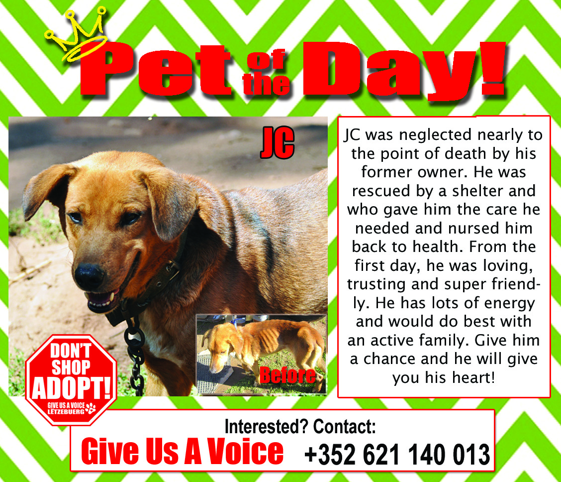03-22-16 Pet of the Day