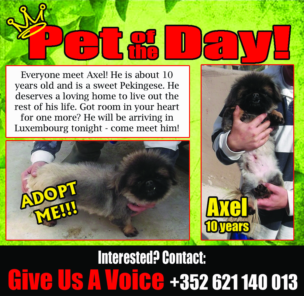 03-30-16 Pet of the Day