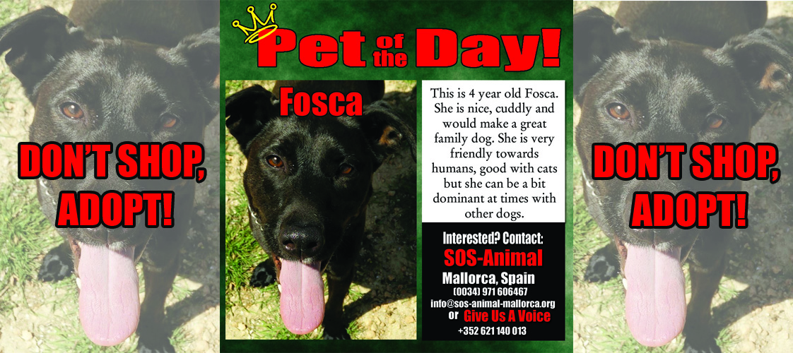 04-27-15 Pet of the Day for website