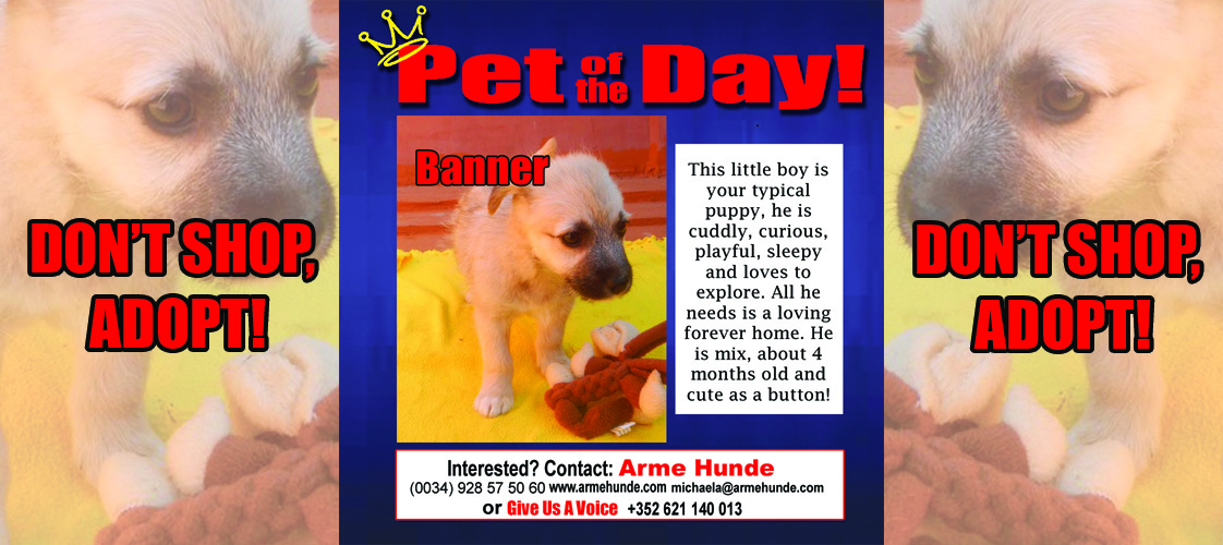 04-28-15 Pet of the Day for website