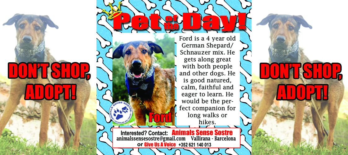 04-30-15 Pet of the Day for website