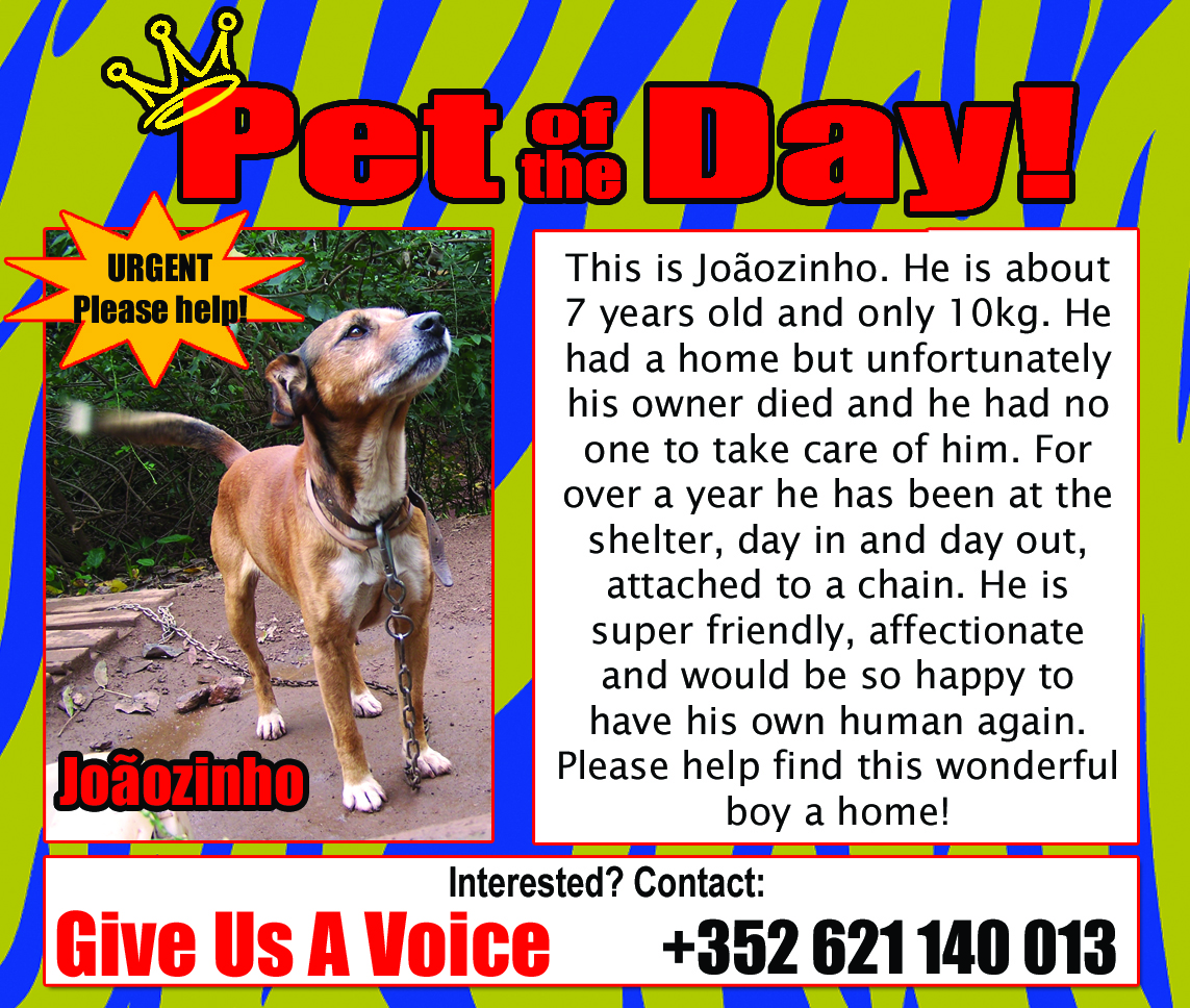 05-03-16 Pet of the Day