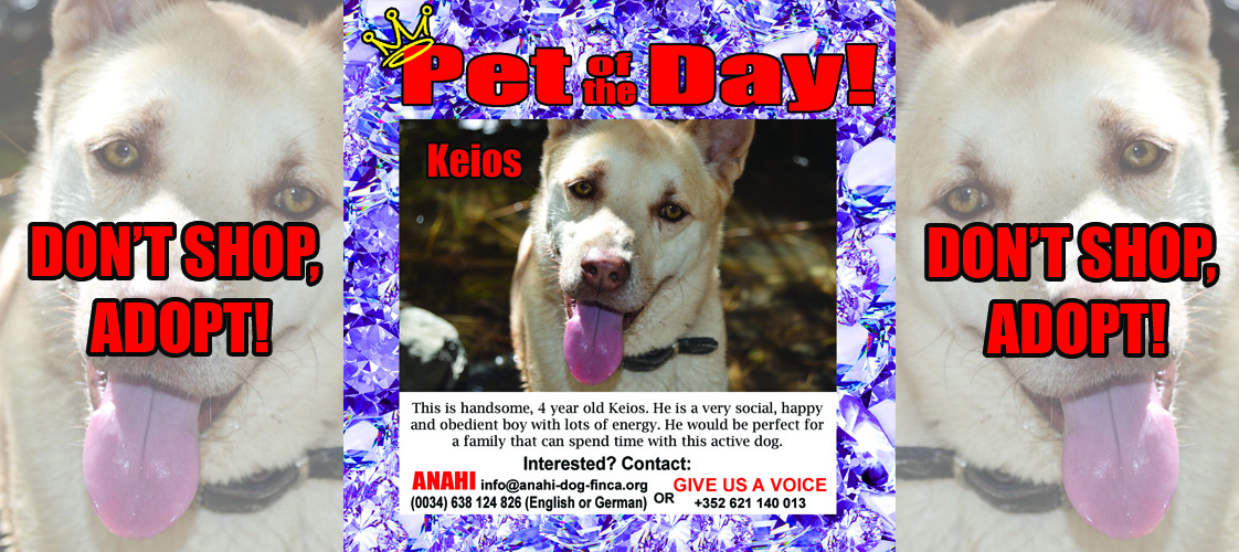 05-06-15 Pet of the Day for website