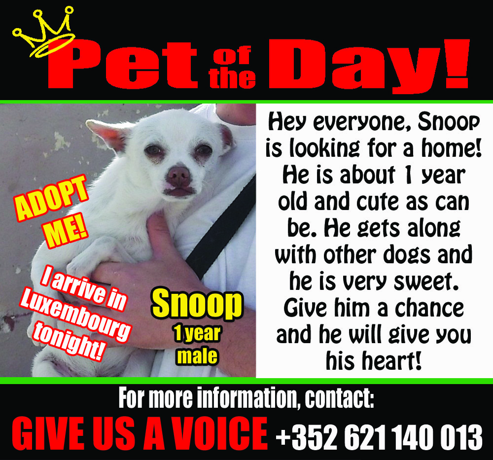05-06-16 Pet of the Day copy