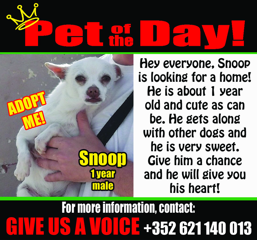 05-06-16 Pet of the Day