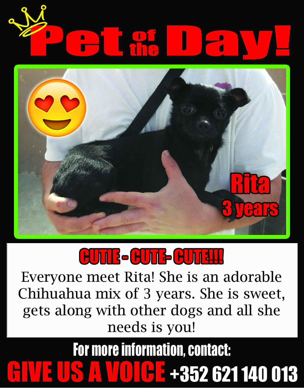 05-09-16 Pet of the Day