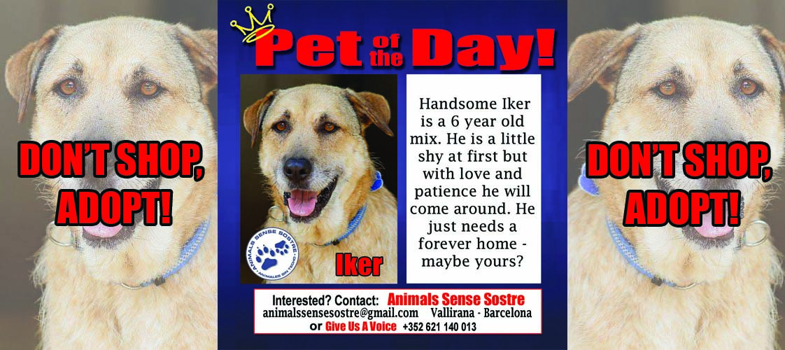 05-11-15 Pet of the Day for website