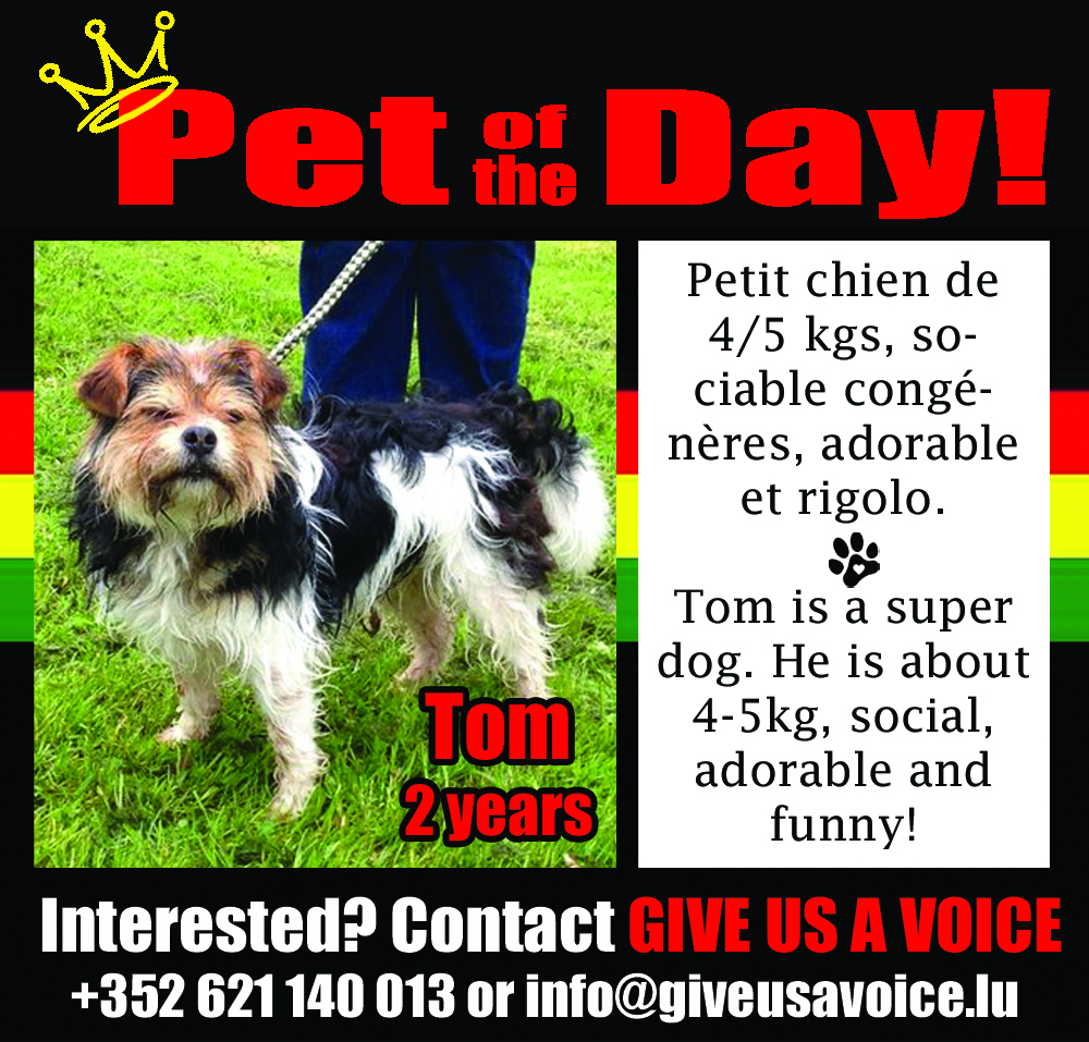 05-12-16 Pet of the Day