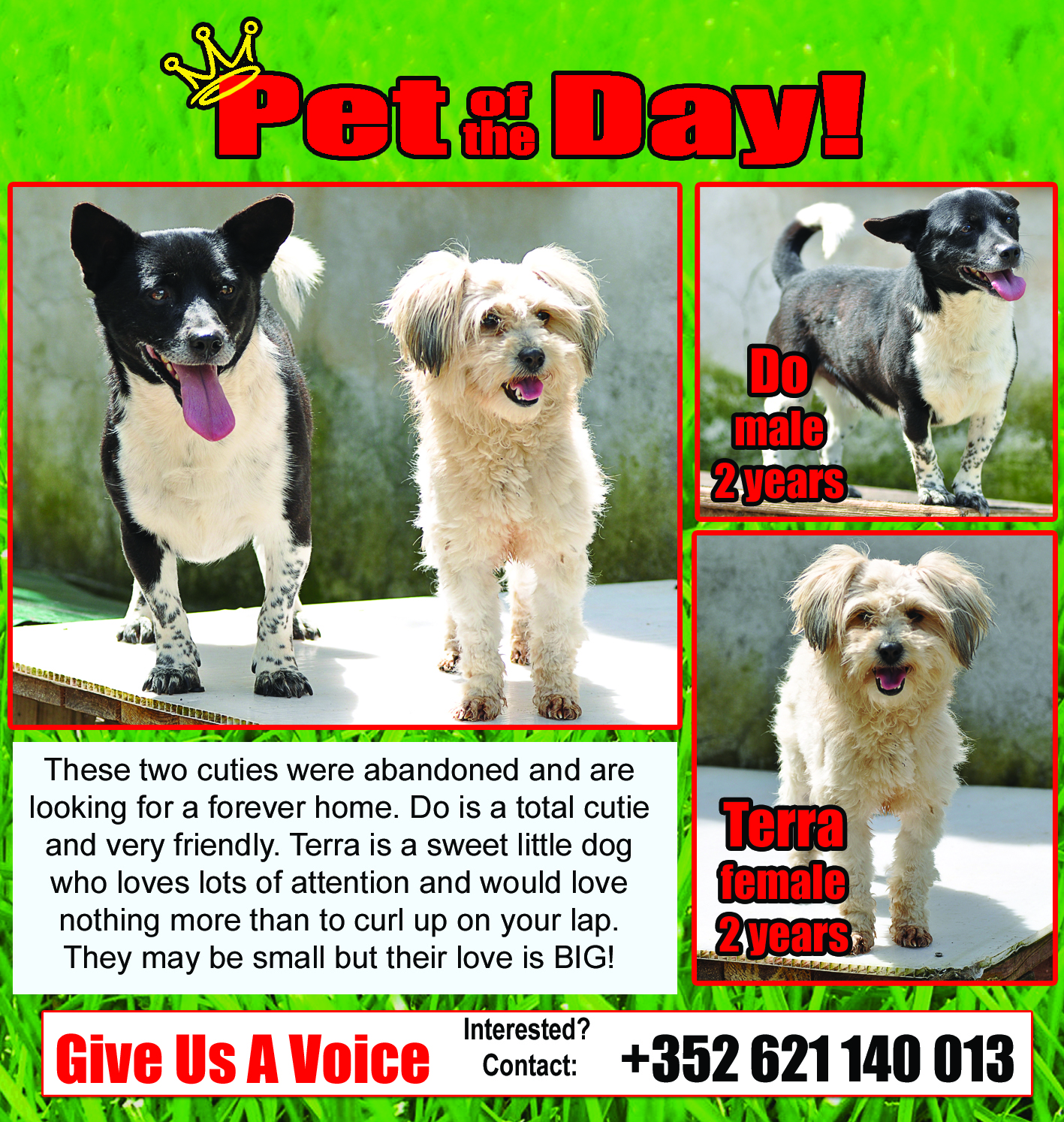05-13-16 Pet of the Day