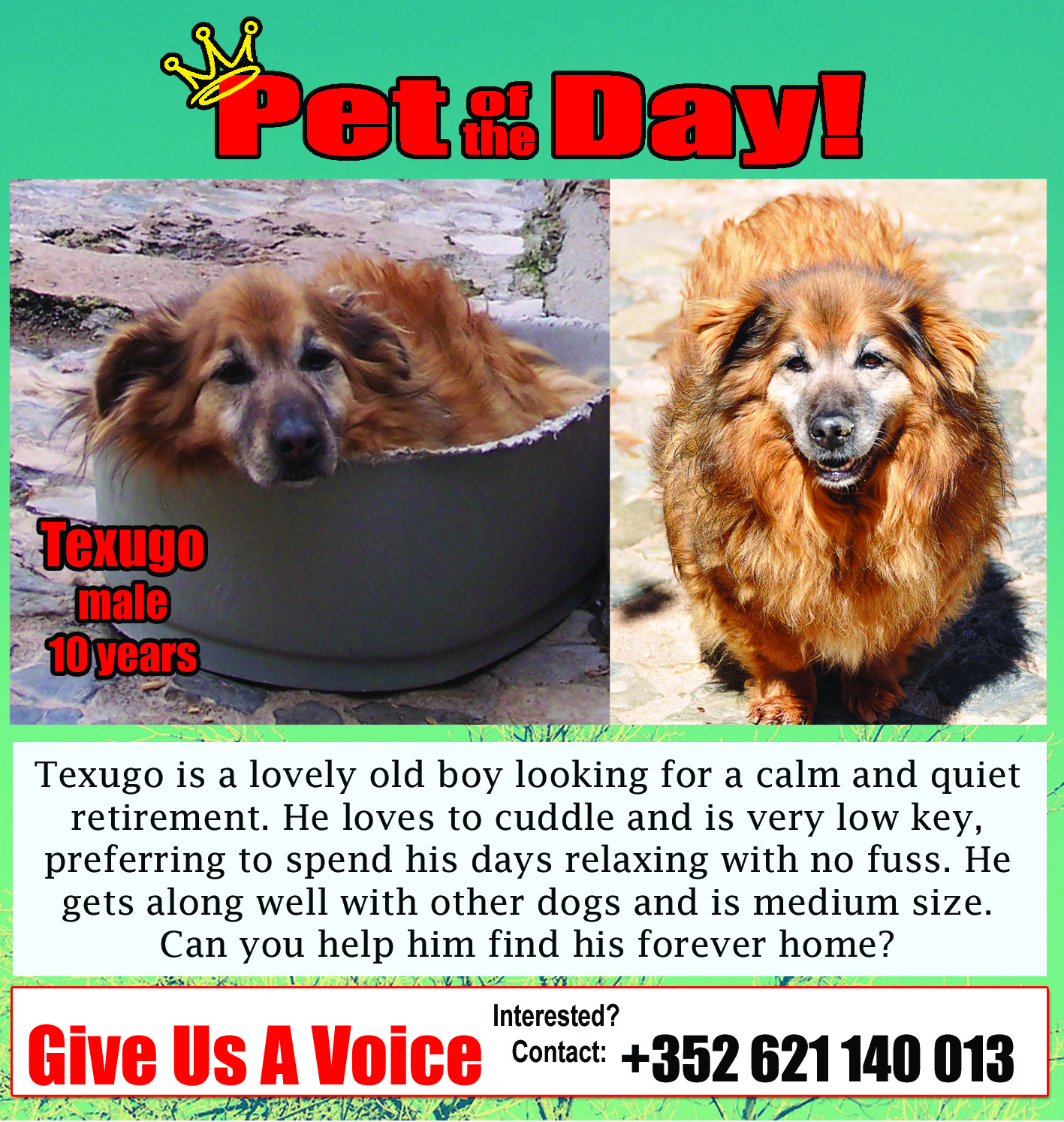 05-18-16 Pet of the Day