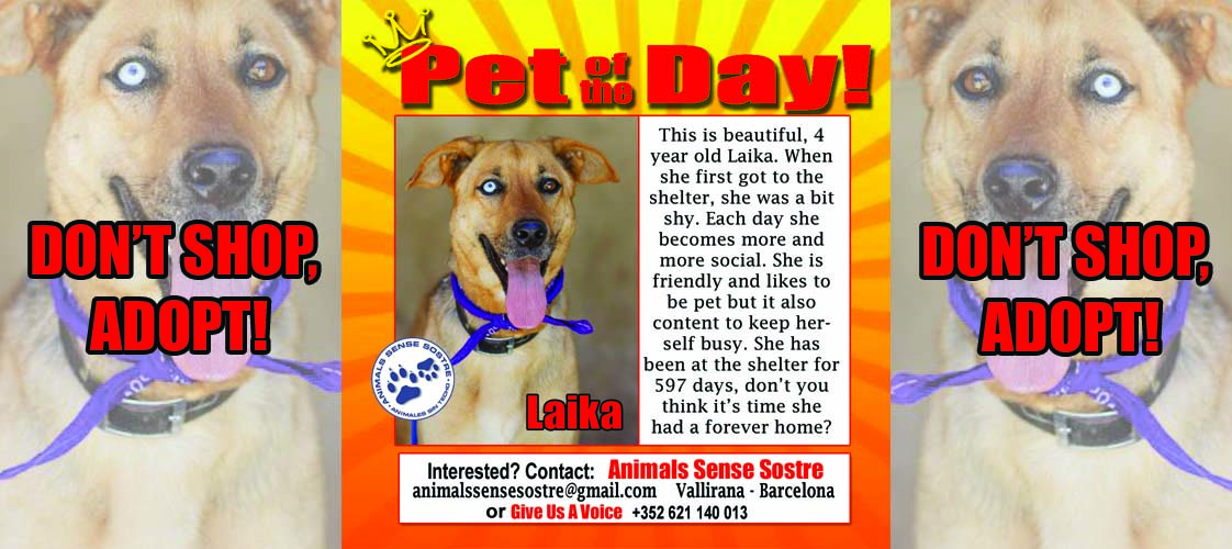 05-19-15 Pet of the Day for website