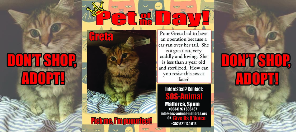 05-20-15 Pet of the Day for website