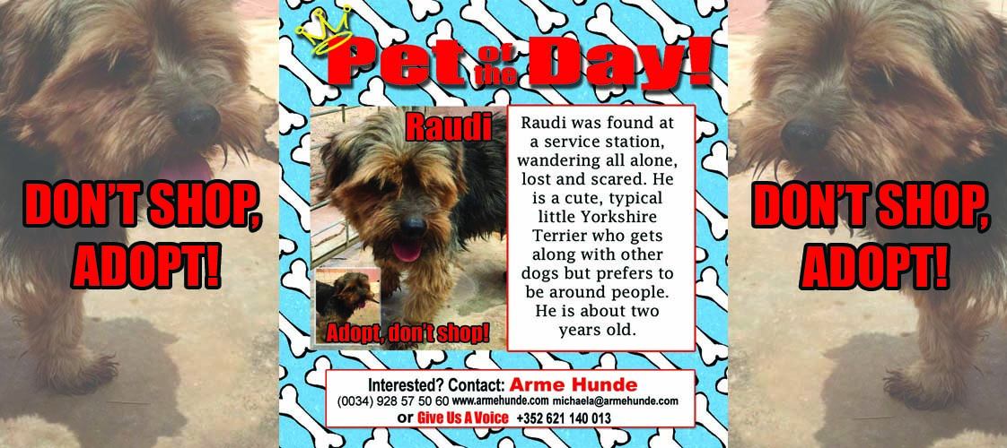 05-22-15 Pet of the Day for website