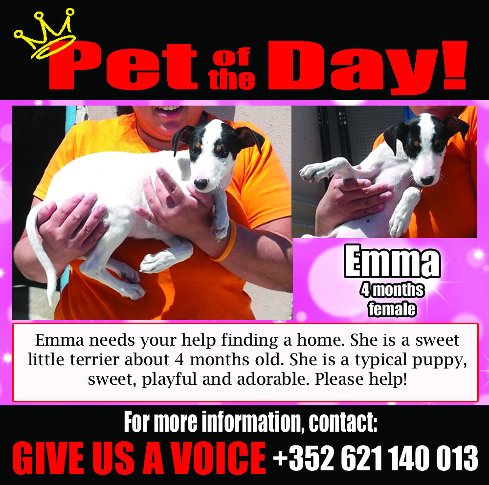 06-01-16 Pet of the Day
