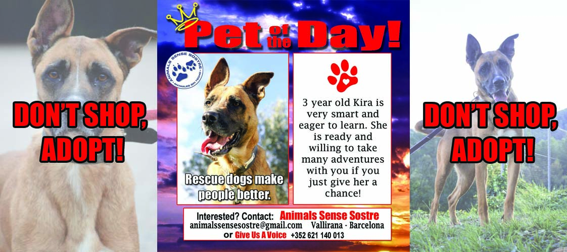 06-02-15 Pet of the Day for website