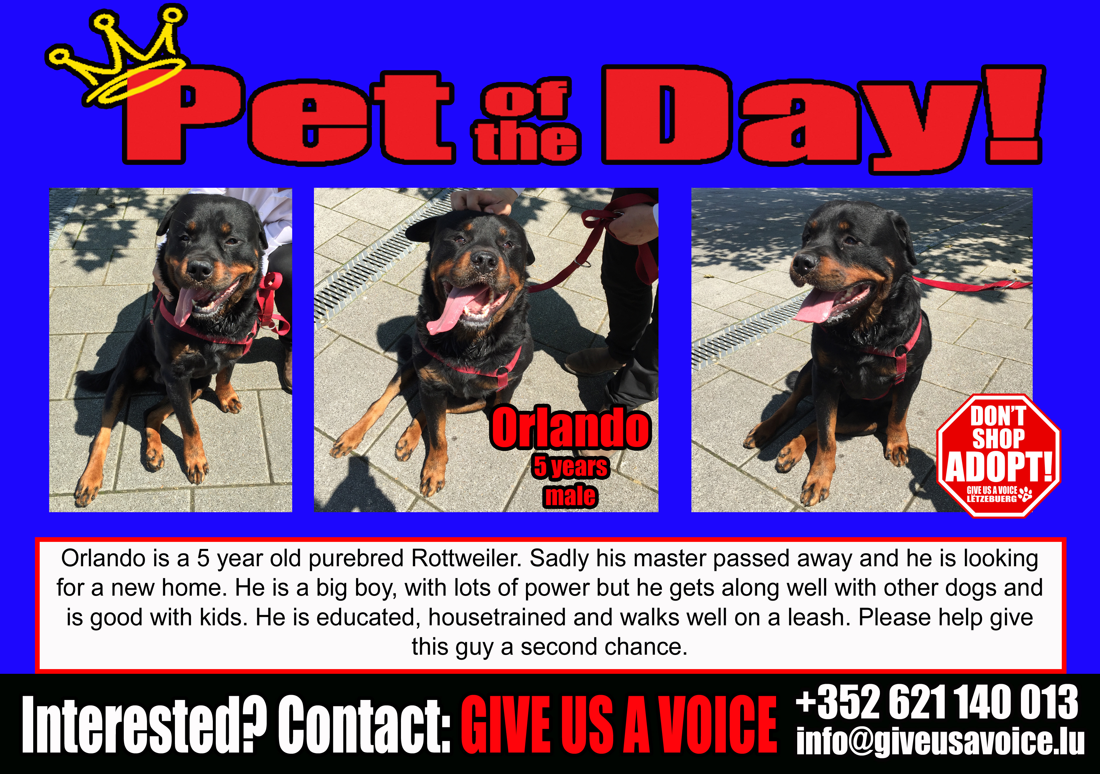 06-06-16 Pet of the Day