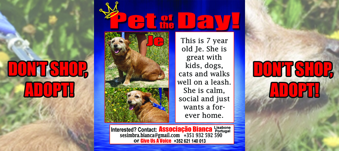 06-09-15 Pet of the Day for website