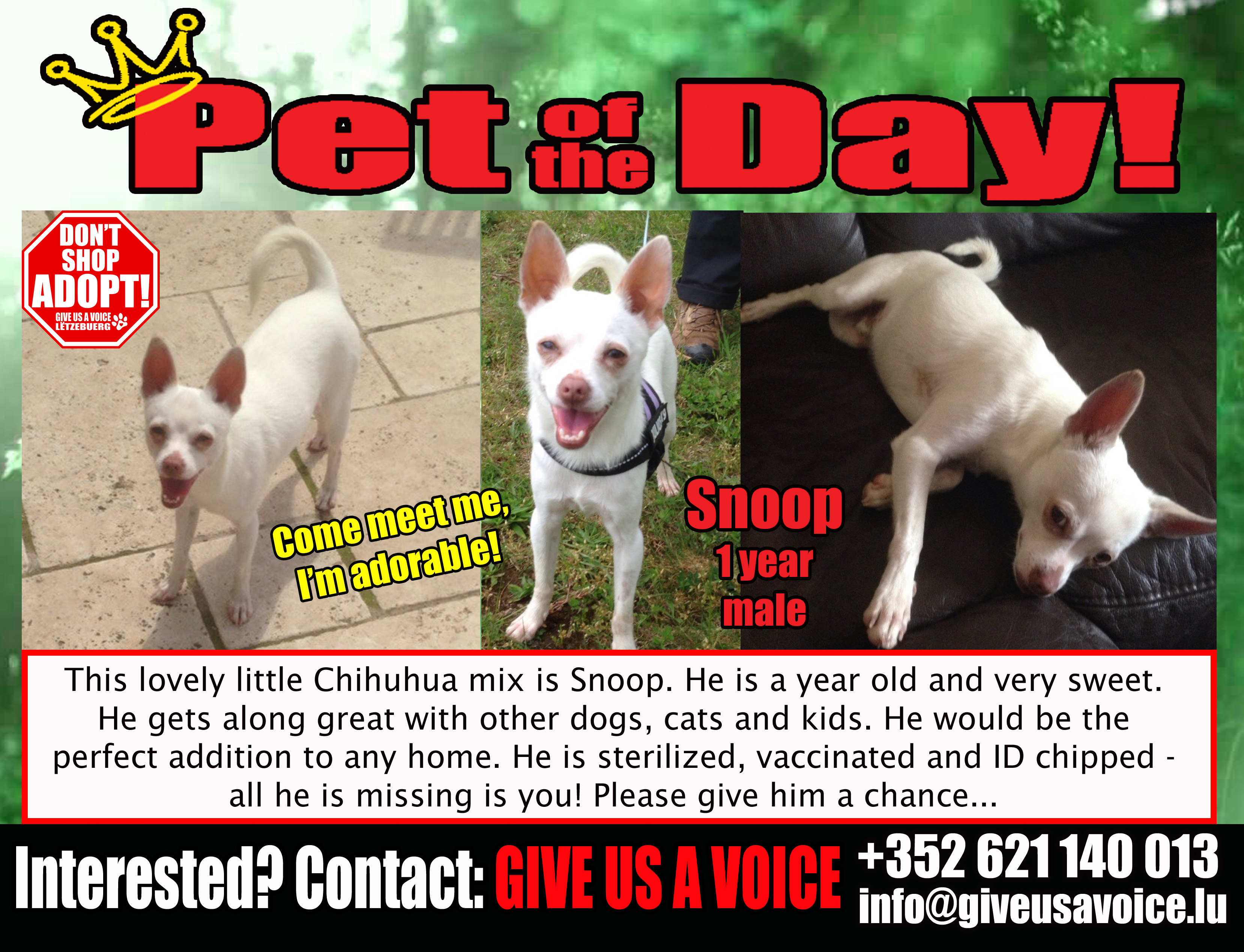 06-09-16 Pet of the Day