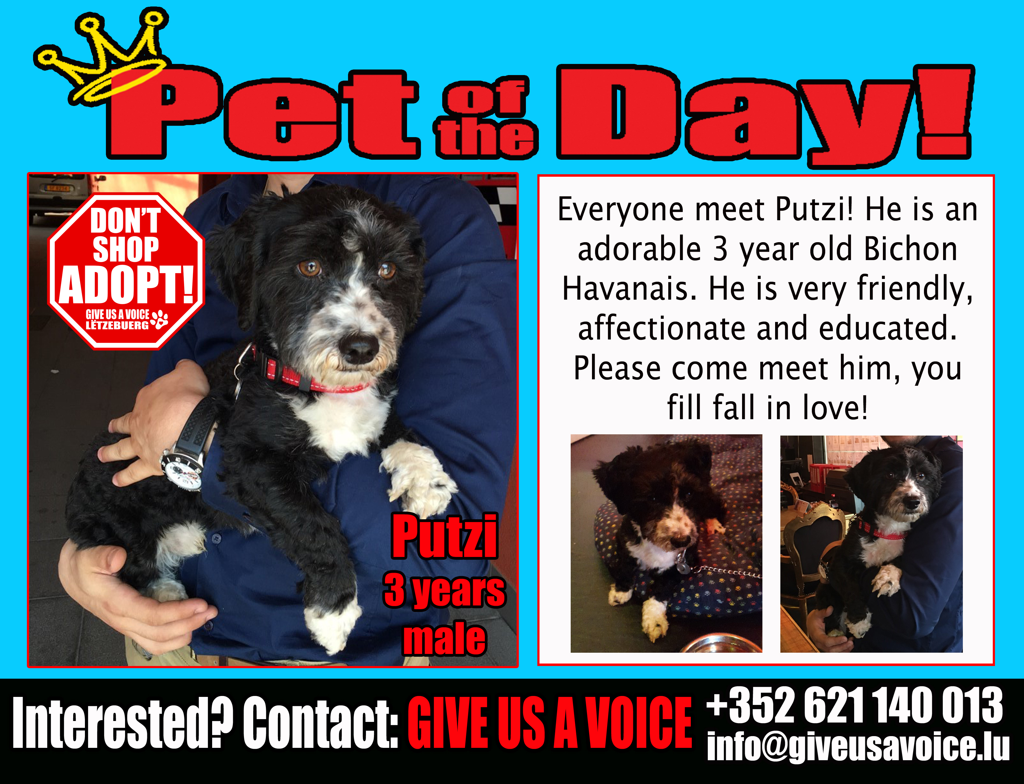06-10-16 Pet of the Day