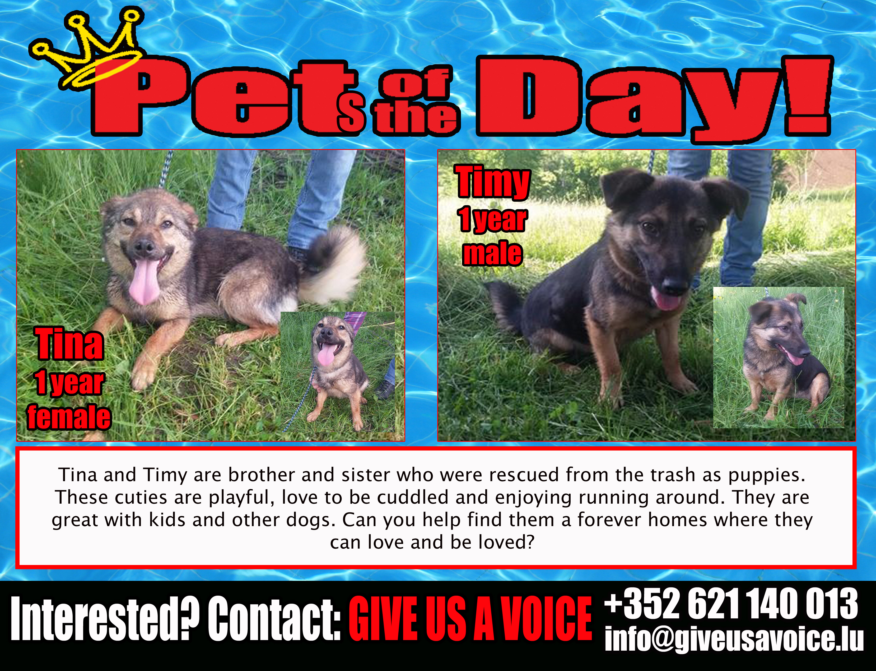 06-11-16 Pet of the Day