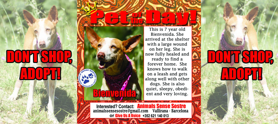 06-12-15 Pet of the Day for website
