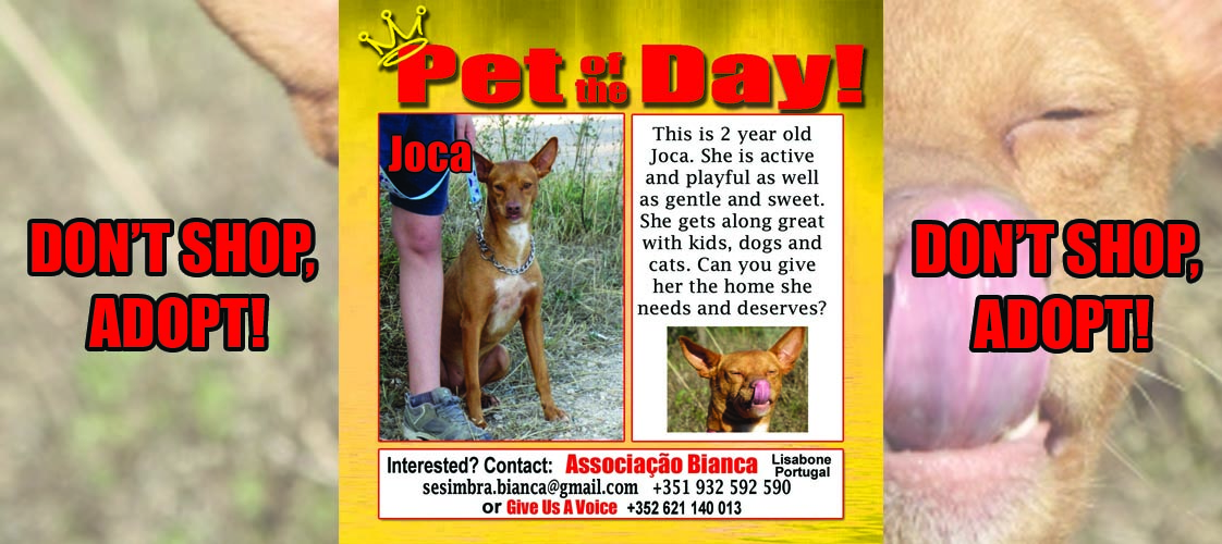 06-15-15 Pet of the Day for website