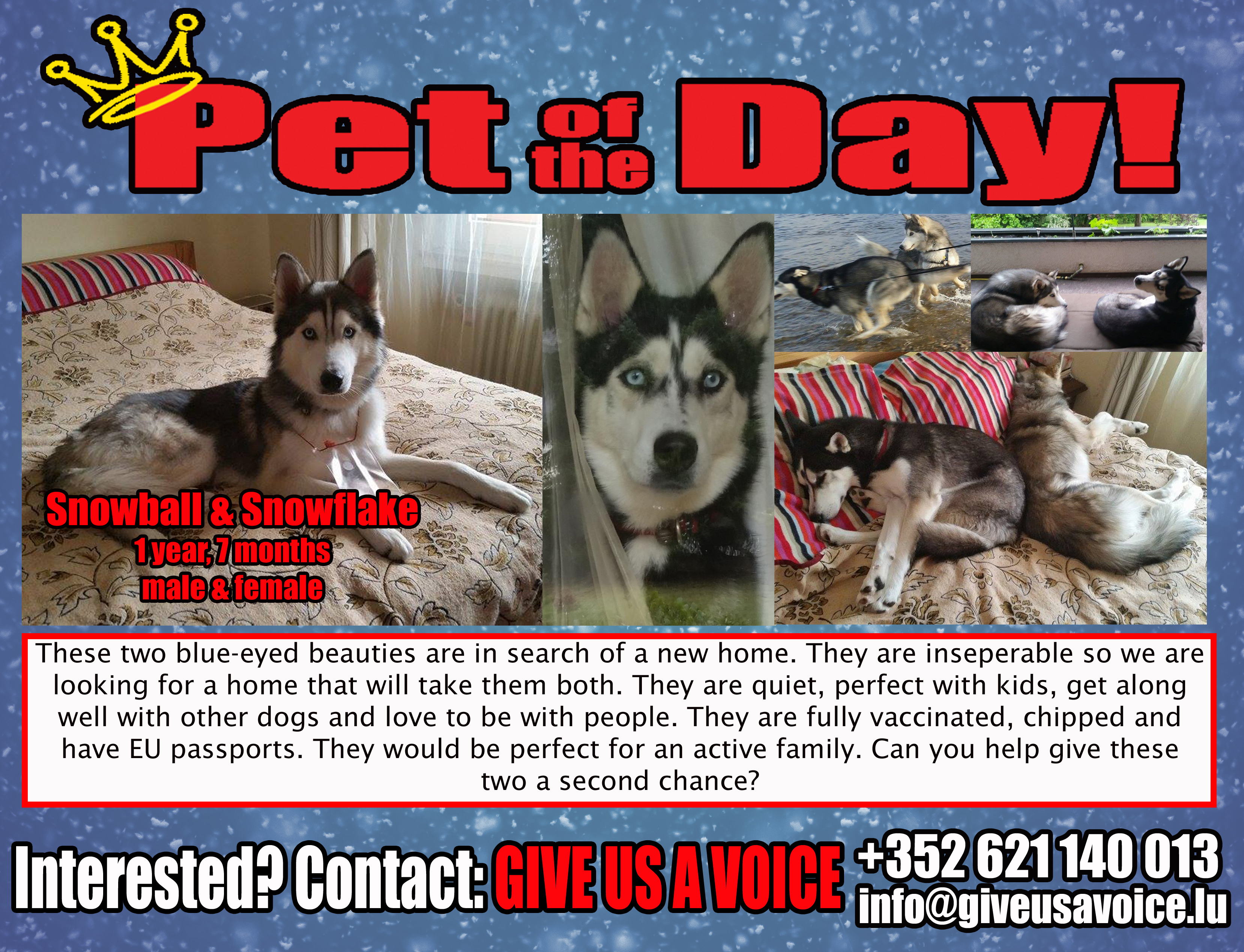 06-20-16 Pet of the Day