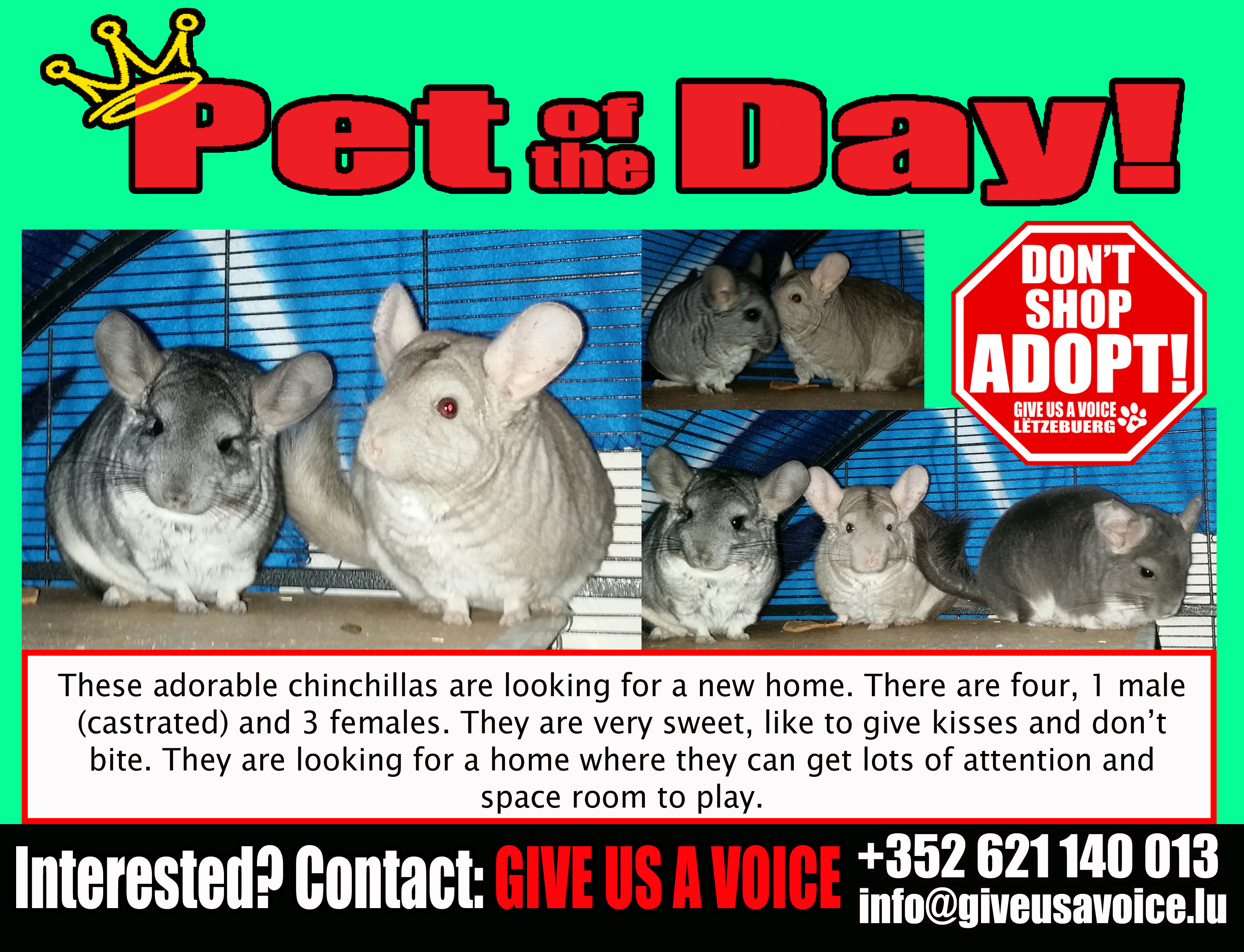 06-21-16 Pet of the Day