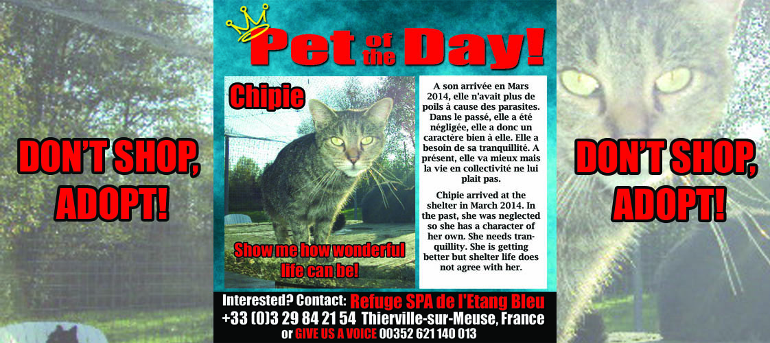 06-24-15 Pet of the Day for website