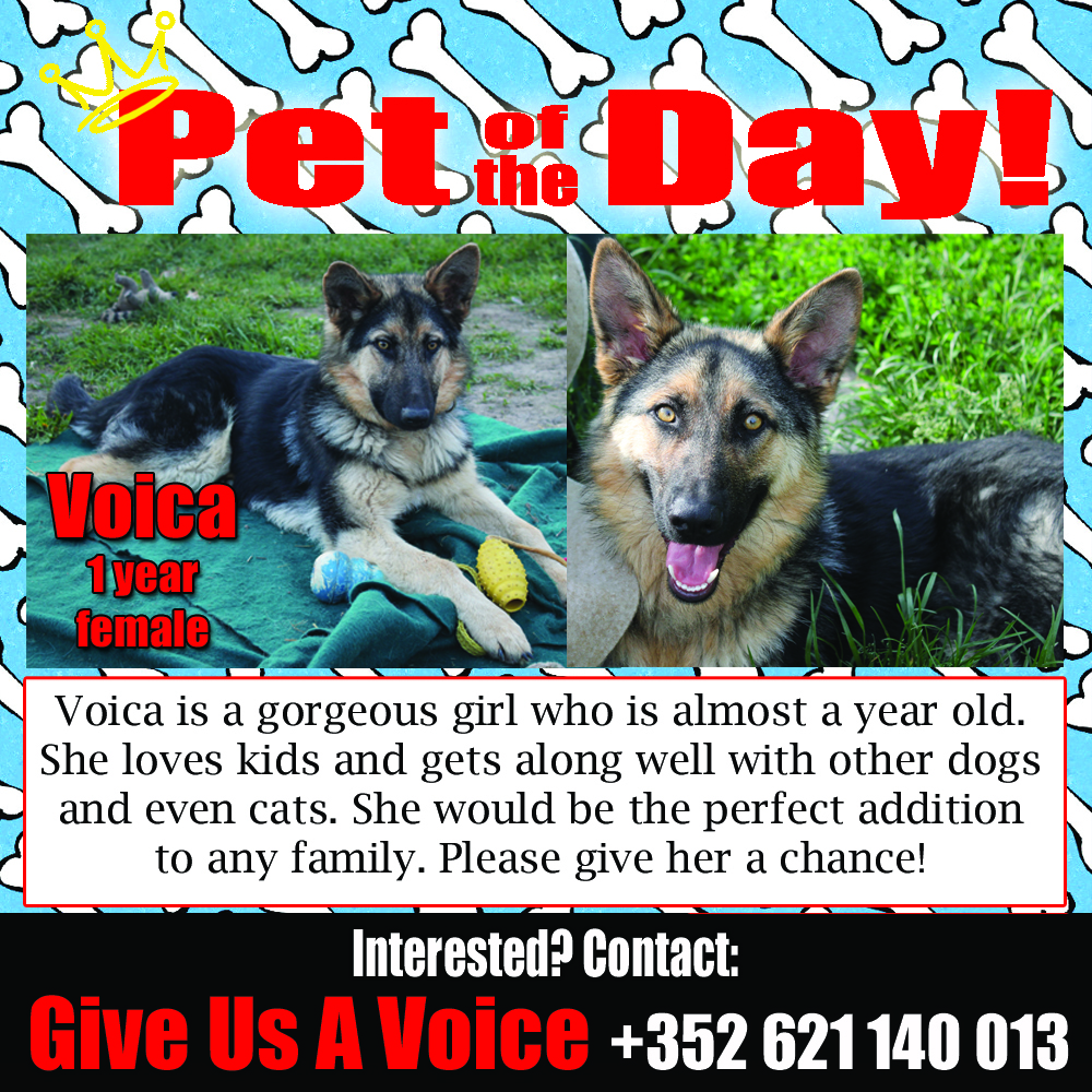 06-24-16 Pet of the Day