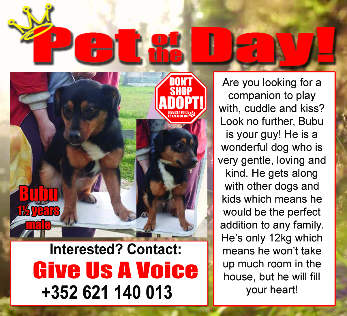06-25-16 Pet of the Day