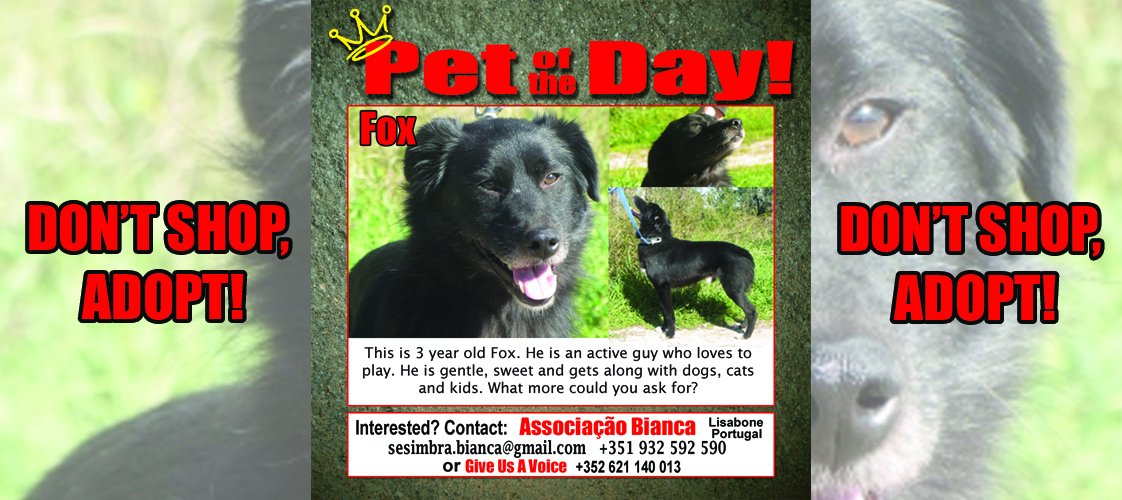 06-26-15 Pet of the Day for website